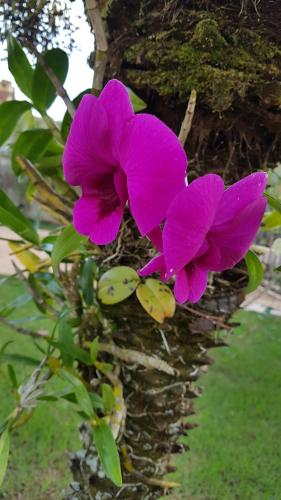 Pousada das Orquídeas Photo