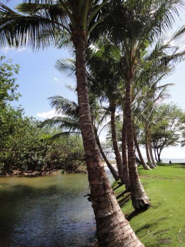 Aloha Aku - Cocopalm 1