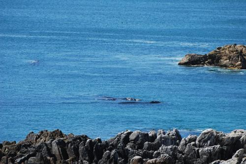 WhaleTale Photo
