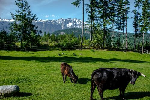 Sweetwater Lane Farm Photo