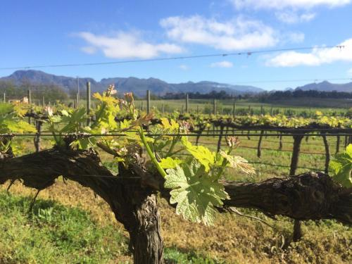 Belfield Wines and Farm Cottages Photo