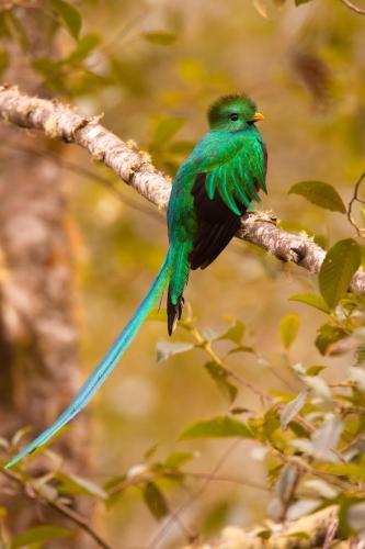 Hotel Mirador de Quetzales Photo