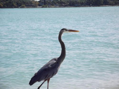 1+1 Large Condo Sarasota - Sarasota, FL 34231