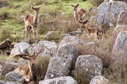 Cabañas Valle de los Ciervos Photo