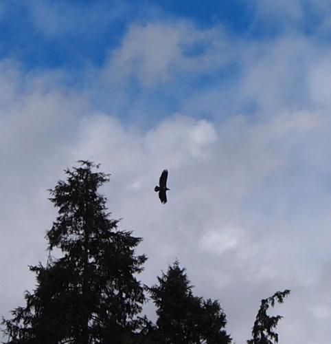Eagles Nest - North Vancouver, BC V7G 1T9