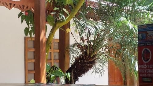 Cabinas Yucca Photo
