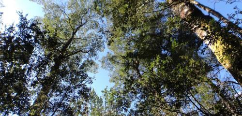 Ecoturismo Los Manzanos Photo