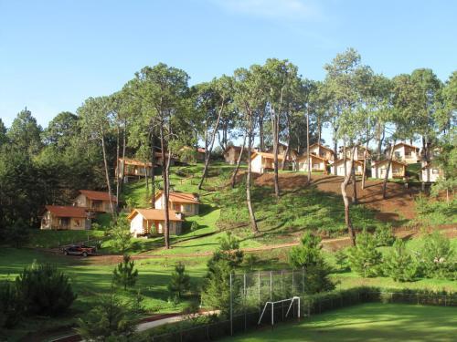 Bosque Escondido Photo