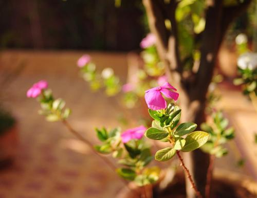 Riad Al Mamoune photo 35