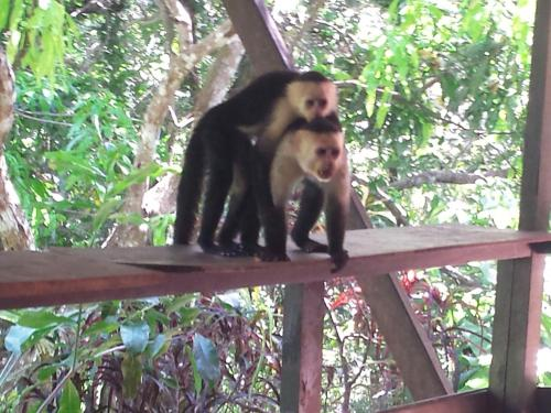 Coyaba Tropical B&B - Adults Only Photo