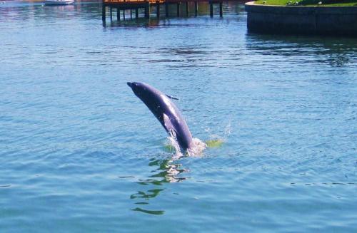 Dolphin Watch At Coconut Villas Of Dunedin Condo - Dunedin, FL 34698