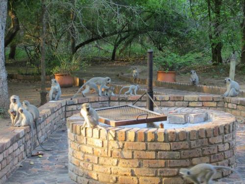 Rafiki's Resthouse Photo