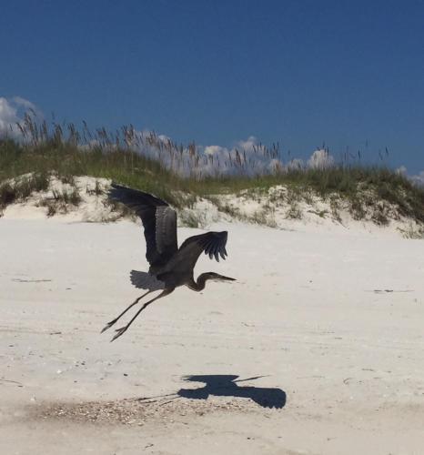 The Dunes - Gulf Shores, AL 36542