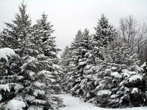Pocono Retreat - Albrightsville, PA 18210