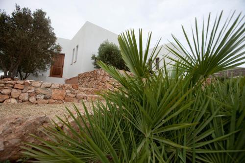 Albaricoques Rural