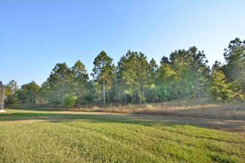 Orange Grove View Photo