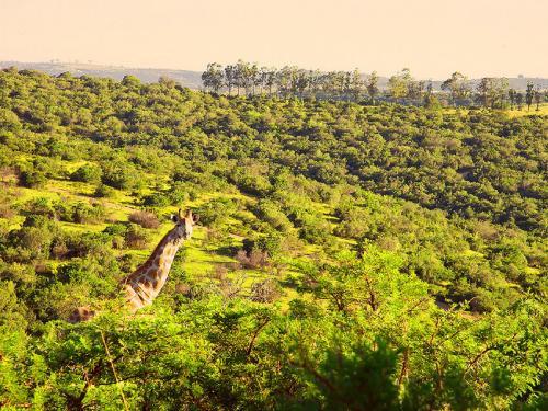 Premier Resort Mpongo Private Game Reserve Photo