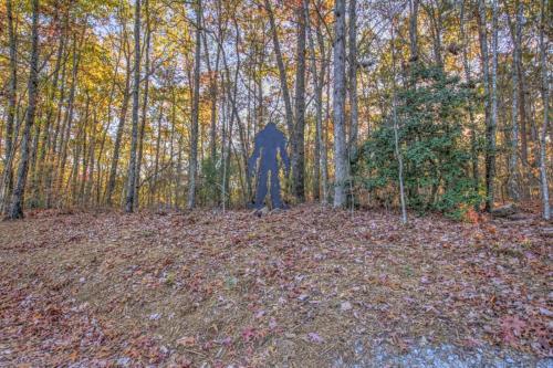 Down Time - Blue Ridge, GA 30513