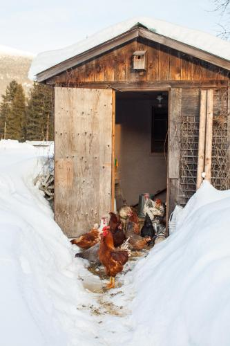 7 Acres Bed & Breakfast - Revelstoke, BC V0E 3K0