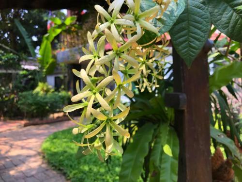 Moradok Thai Guesthouse photo 22