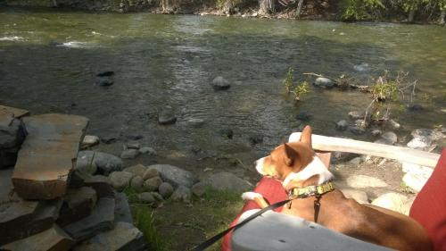 Twisp River Suites/ Paws A-While Photo
