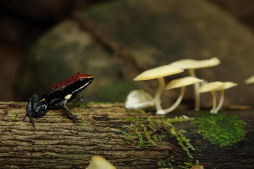 Suchipakari Amazon Eco -Lodge & Jungle Photo