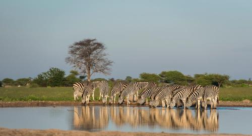 Leopard Plains