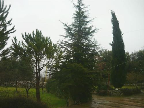 Baadaran Guesthouse