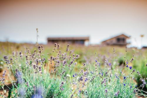 Natura Hill Vendégház és Étterem photo 20