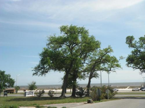 Oak Shores 138 - Two Bedroom Apartment - Biloxi, MS 39531