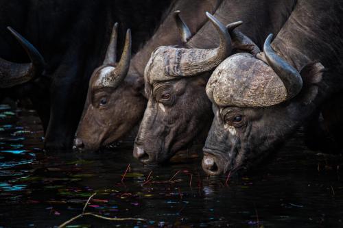 Motswari Private Game Reserve Photo