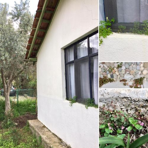 Cirali Friends Pension&Camping, Cıralı