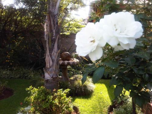 Lobelia Guesthouse Photo