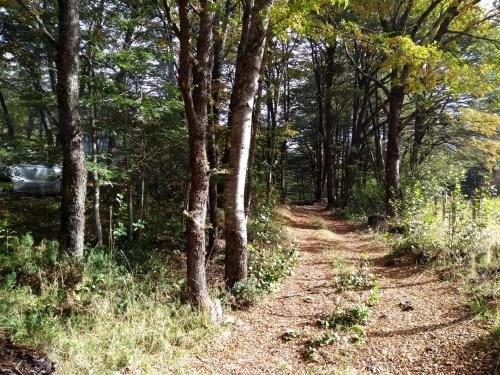 Domo Entre Bosques