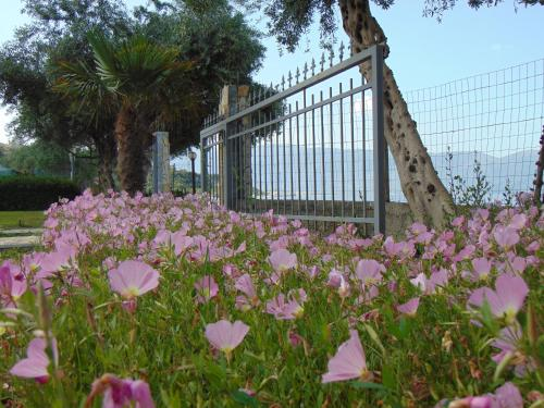 Vila Oasis Radhime
