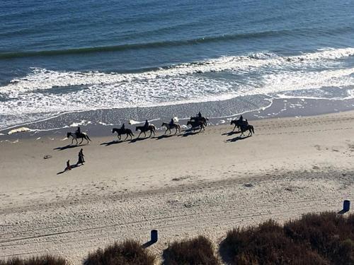 Grand Atlantic 902 Photo
