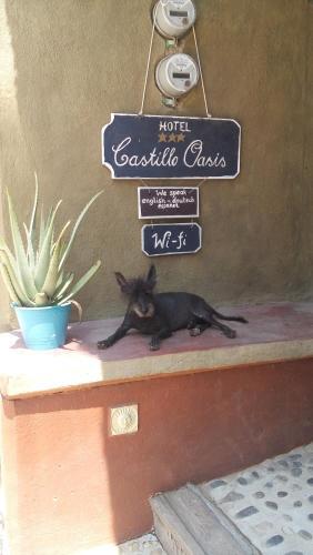 Castillo Oasis Photo