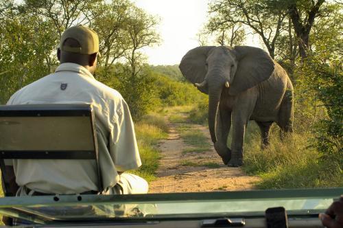 Lukimbi Safari Lodge Photo