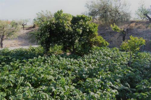 Cortijo Rural los Ejeas