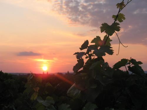 Wein & Landhaus Willi Opitz