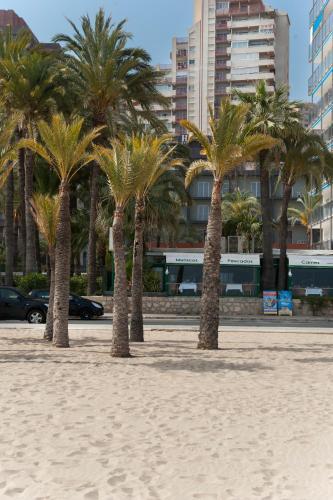 Hotel El Palmeral photo 66