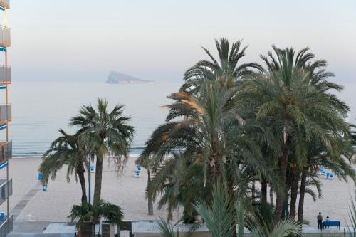 Hotel El Palmeral photo 91