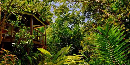 San San, Port Antonio, PO Box 7312, Portland, Jamaica.
