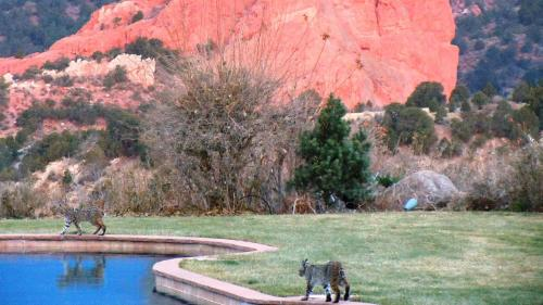 Exceptionnel Garden Of The Gods Club Hotel Colorado Springs