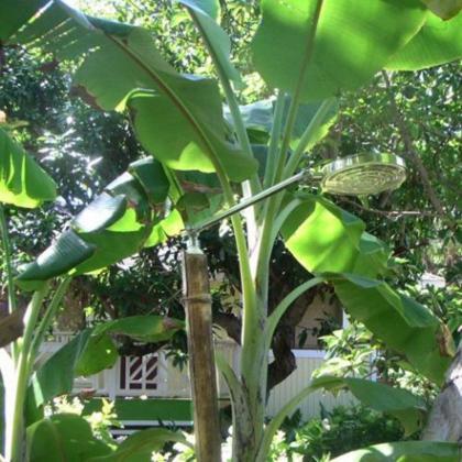 17 Palms Kauai - Kapaa, HI 96746