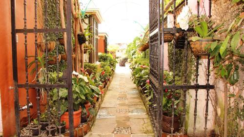 Villa Bonita Les Terrasses Photo