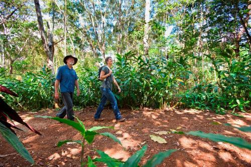 324 Land Road, Malanda, North Queensland, 4885, Australia.