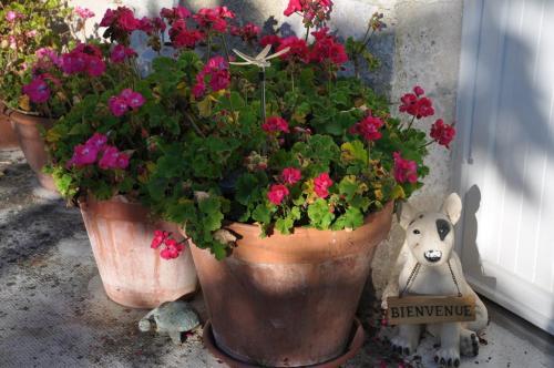La Maison de Rose