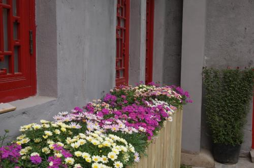 Yue Xuan Courtyard Garden International Youth Hostel photo 5