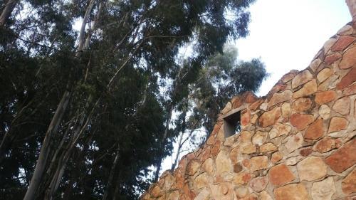 Treelands Castle Photo